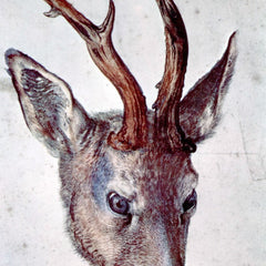The Museum Outlet - Head of a deer by Durer