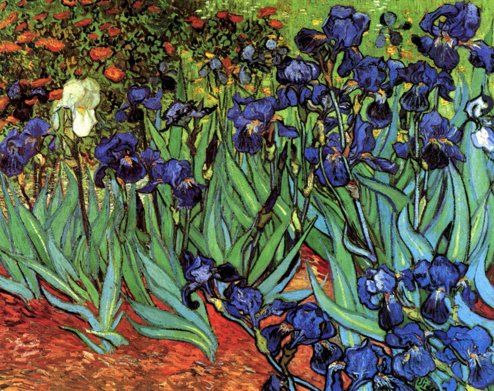 The Museum Outlet - Irises