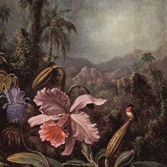 The Museum Outlet - Orchids, passion flowers and hummingbirds by Martin Johnson Heade