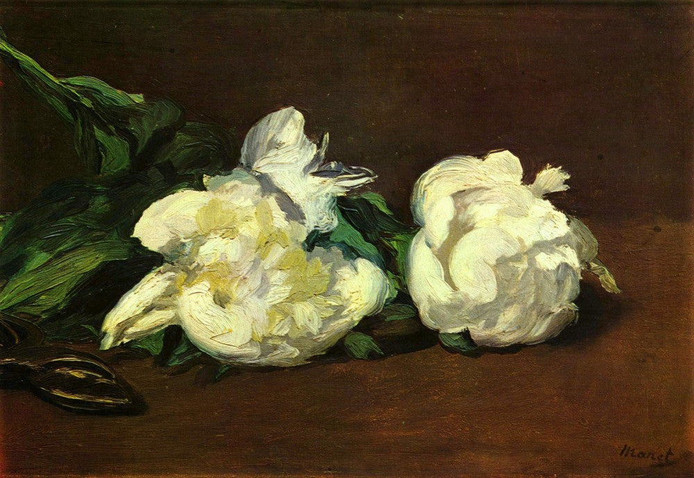 The Museum Outlet - Still life, White Peony by Manet