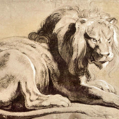 The Museum Outlet - Study of a Lion by Rubens
