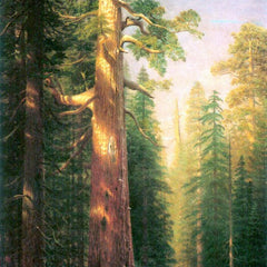 The Museum Outlet - The big trees, Mariposa Grove, California by Bierstadt