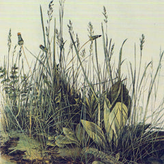 The Museum Outlet - The large piece of grass by Durer