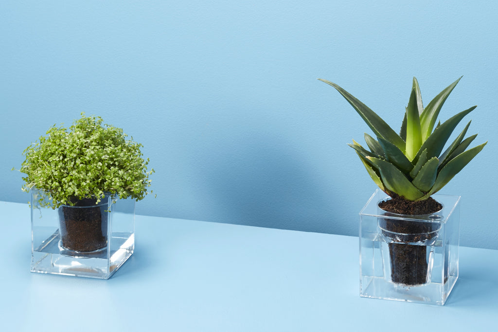 Giving Plants as Christmas Gifts