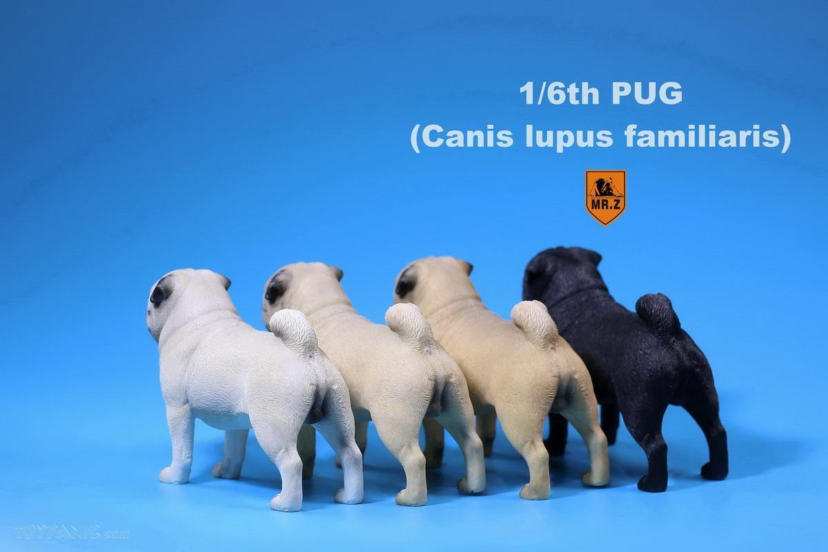 Mr. Z - Real Animal Series No. 18 - Pug 003 (Cream) (1/6 Scale)