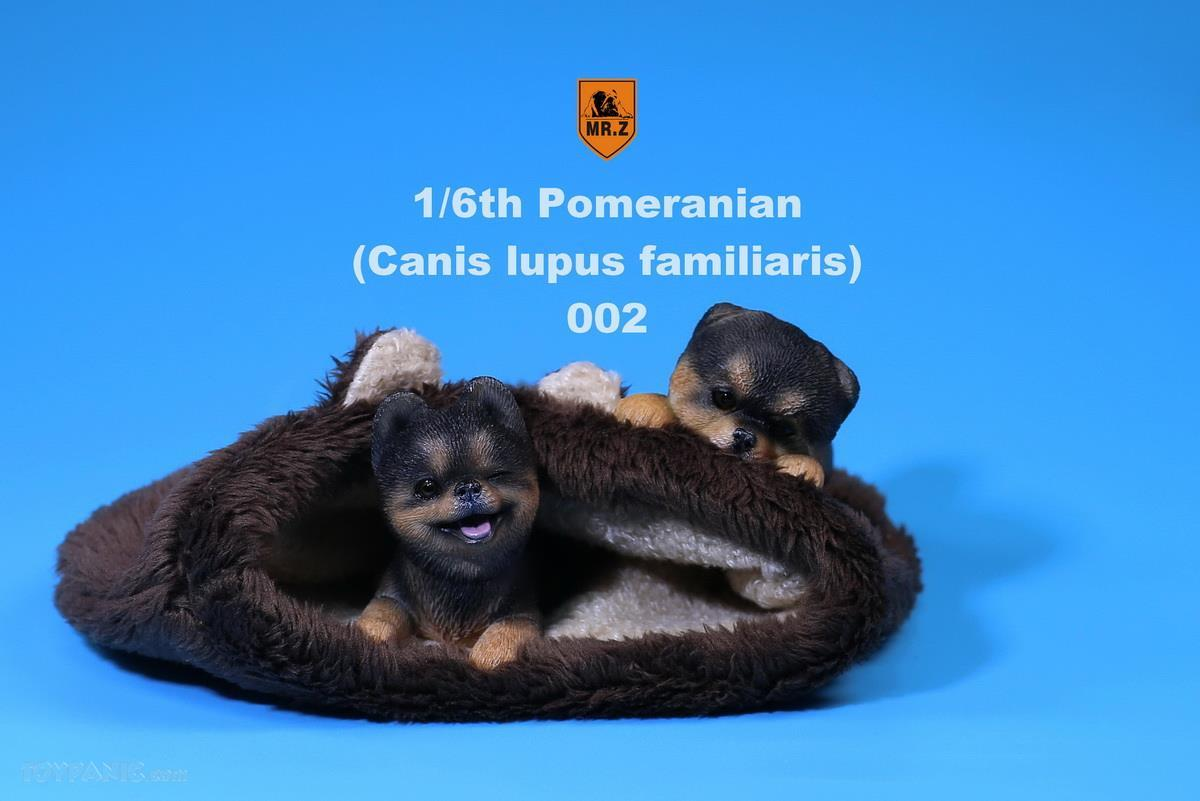 Mr. Z - Real Animal Series No. 20 - Pomeranian Puppies Set of 2 002 (Black Brown) (1/6 Scale)