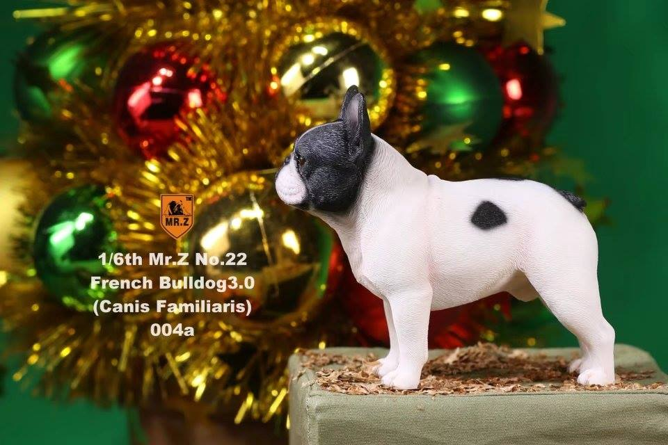 Mr. Z - Real Animal Series No. 22 - French Bulldog 3.0 004a+b (1/6 Scale)