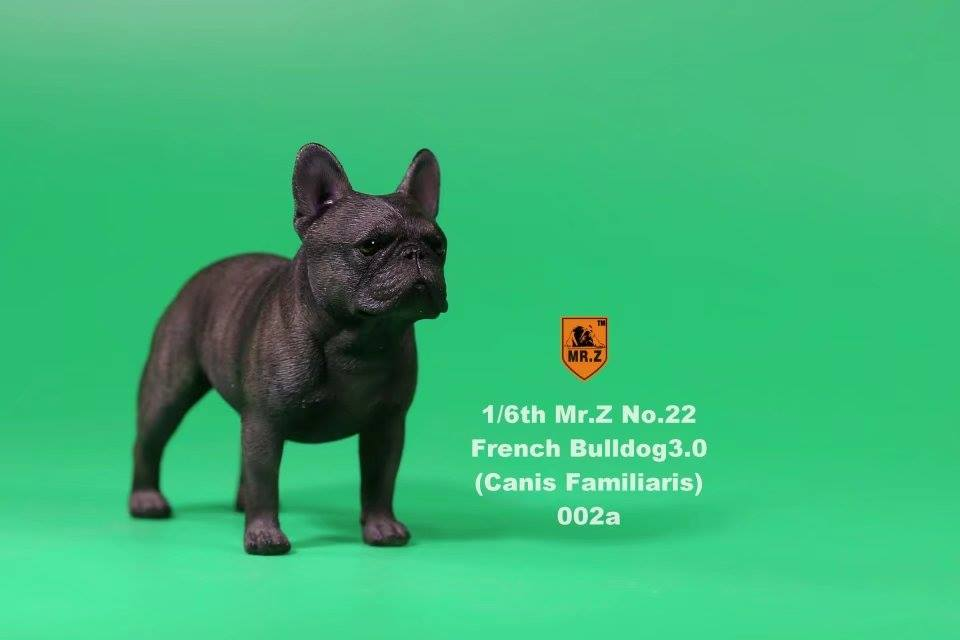 Mr. Z - Real Animal Series No. 22 - French Bulldog 3.0 002a+b (1/6 Scale)