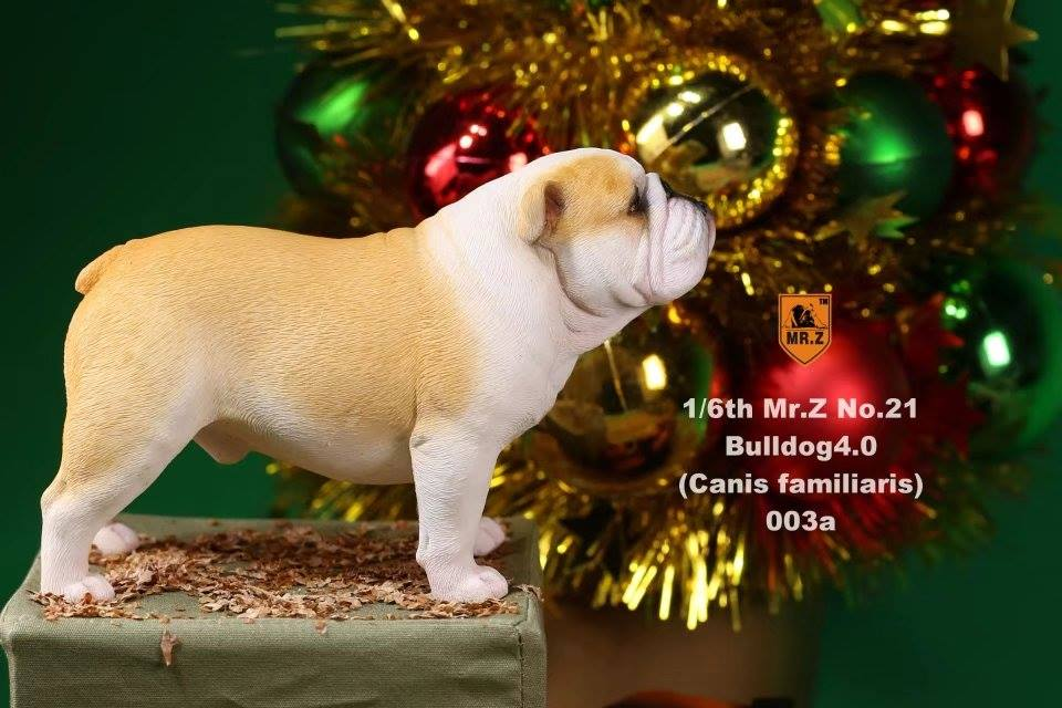 Mr. Z - Real Animal Series No. 21 - British Bulldog 4.0 003a+b (1/6 Scale)