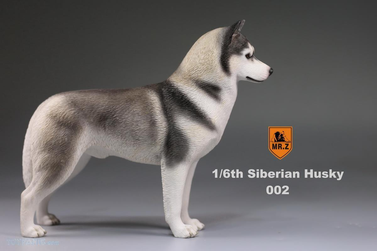 Mr. Z - Real Animal Series No. 16 - Siberian Husky 002 (1/6 Scale)