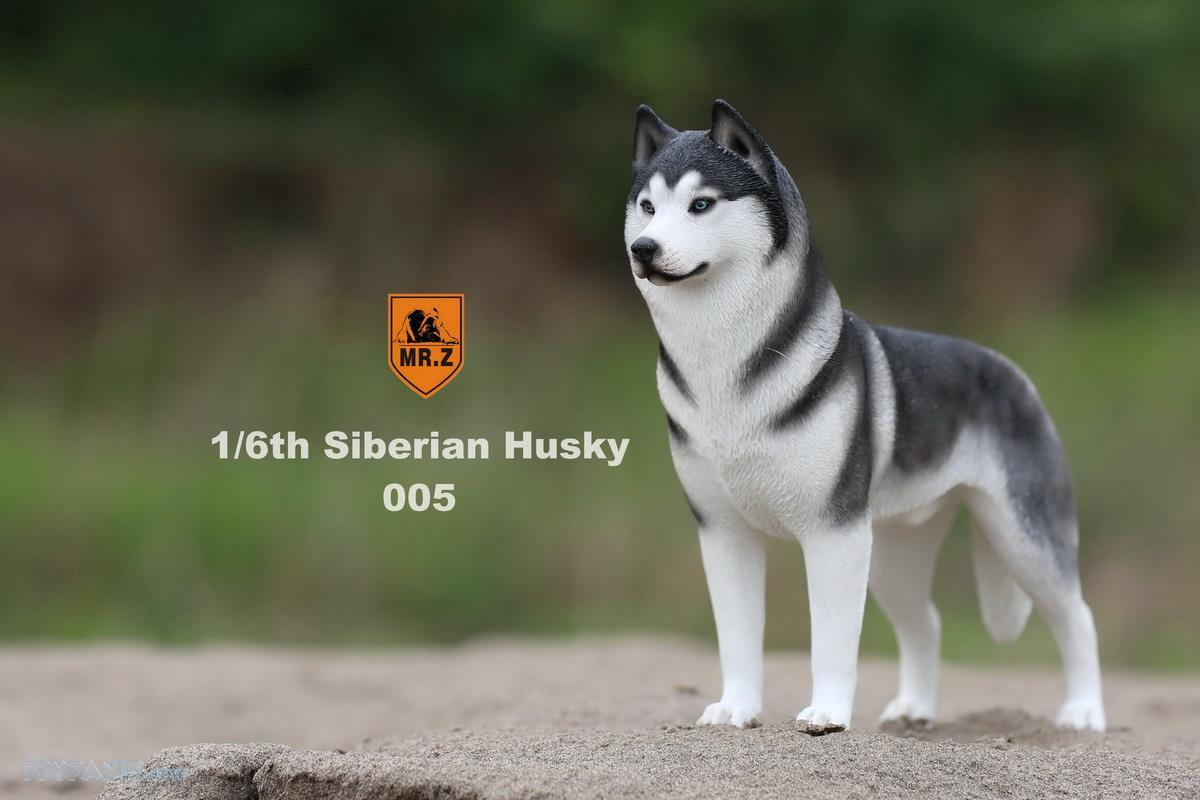 Mr. Z - Real Animal Series No. 16 - Siberian Husky 005 (1/6 Scale)