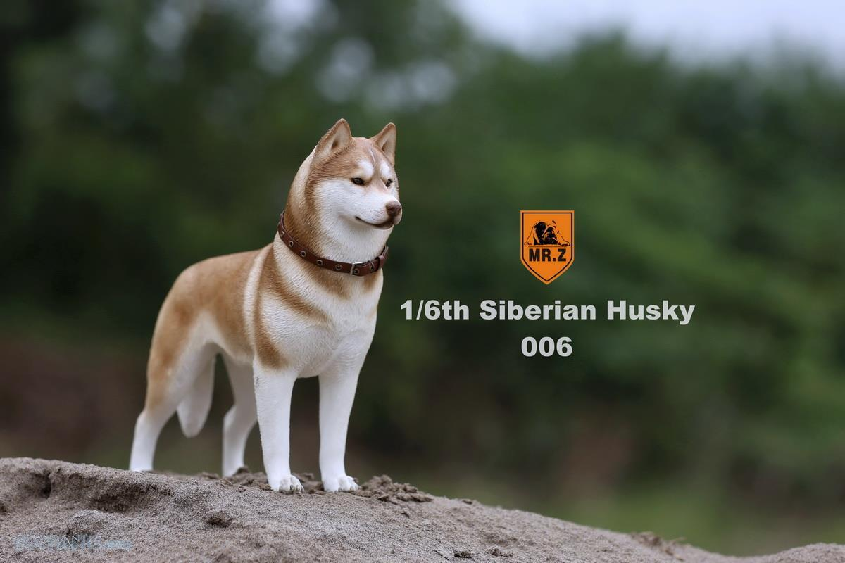 Mr. Z - Real Animal Series No. 16 - Siberian Husky 006 (1/6 Scale)