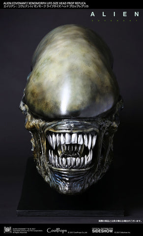 Sideshow Collectibles - CoolProps - Alien: Covenant - Xenomorph Life-Size Head Prop Replica