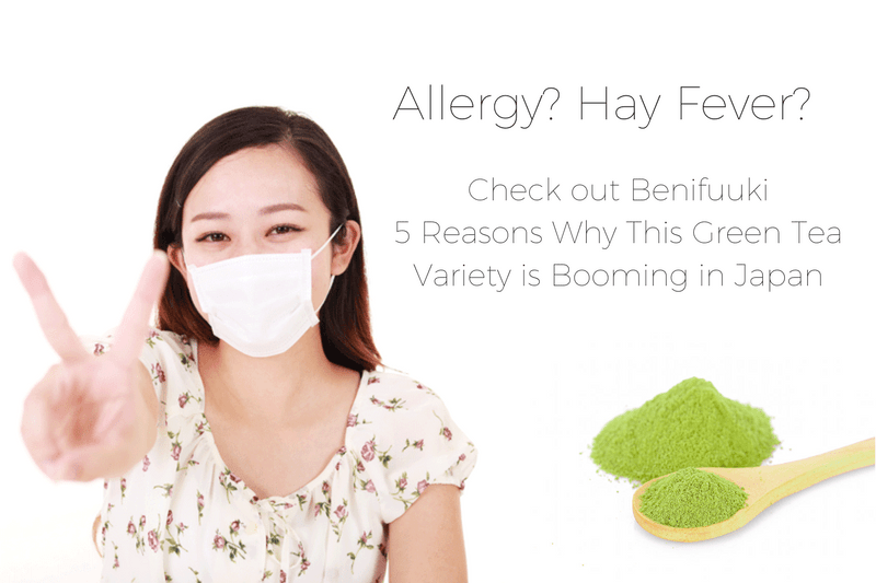 Allergy? Hay Fever? Check out Benifuuki - 5 Reasons Why This Green Tea Variety is Booming in Japan