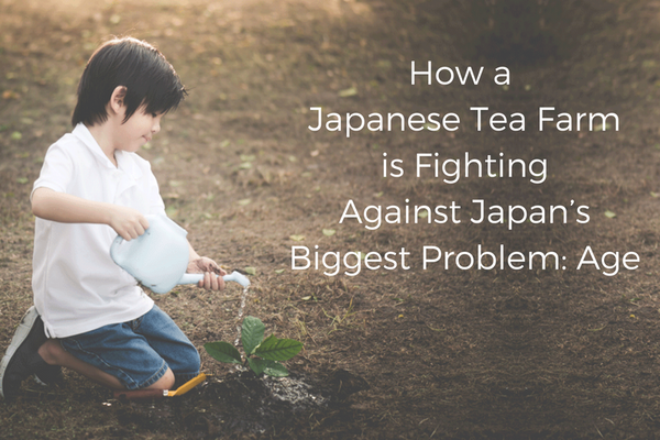 How A Japanese Tea Farm is Fighting Against Japan's Biggest Problem – Age