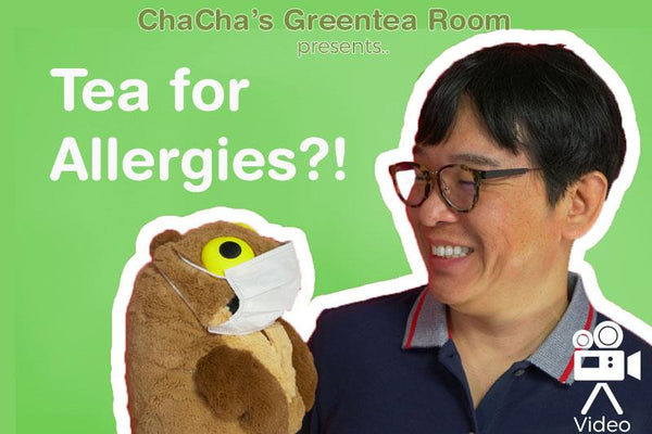 Tea for Allergies?! What is Benifuki Tea? - ChaCha's GreenTea Room Video