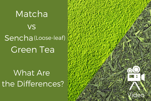 Matcha vs Sencha (Loose-Leaf) Green Tea: What Are the Differences?