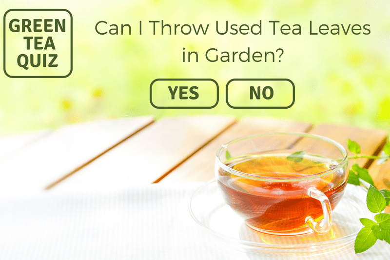 CAN I THROW USED GREEN TEA LEAVES IN GARDEN?