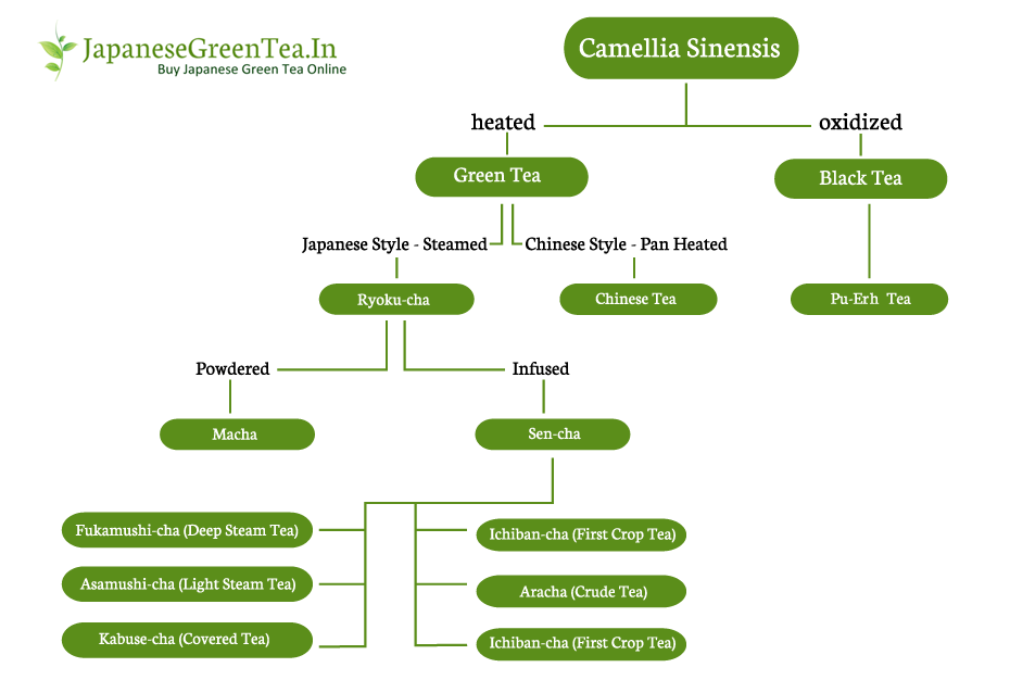 Type of Japanese Green Tea