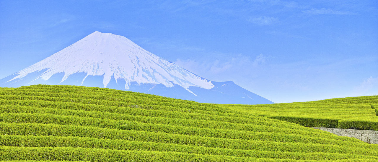 We strive to bring the best Green Tea from Japan