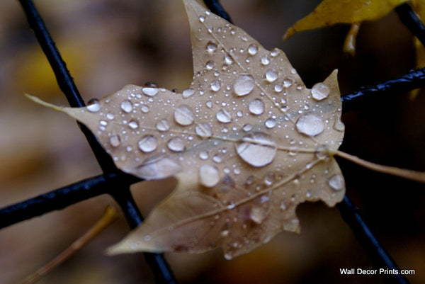 Leaf Droplets Wall Art 8x12 Delivered Free