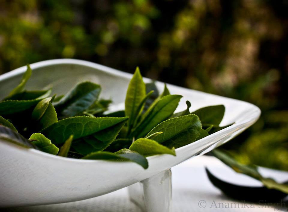 Tea Chronicles: What is the difference between green tea and black tea?