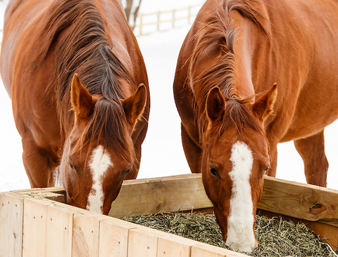 How to keep your Horse Hydrated & Happy this Winter