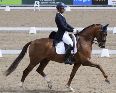 Back to basics feeding regimen for Lisa Morgan's Dressage horses
