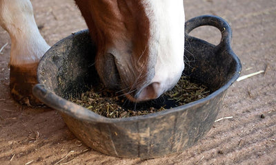 Feeding Forage and Avoiding Colic