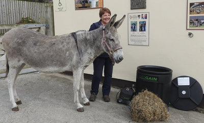 """Bray!"" for Steamed Hay Says Elderly Donkey Near Death No More"