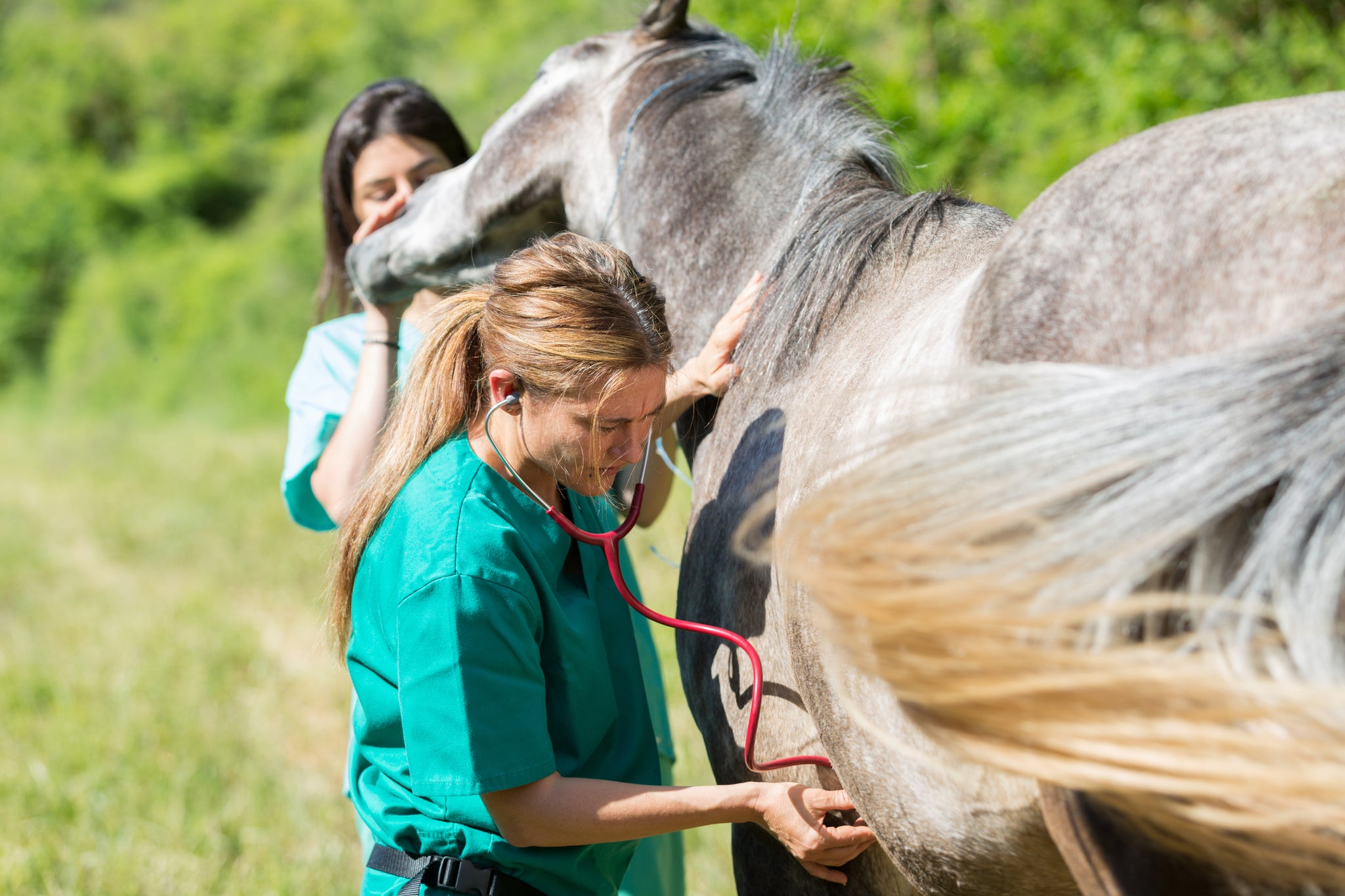Equine Asthma: A new term for an old problem