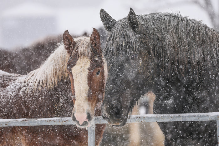 How horses adapt to the Winter Season