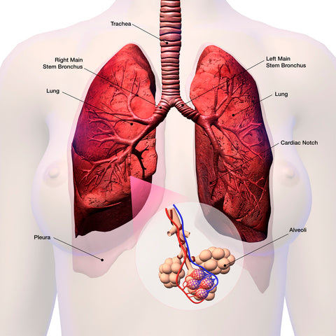 It's not just horses at risk from hay…what about your lungs