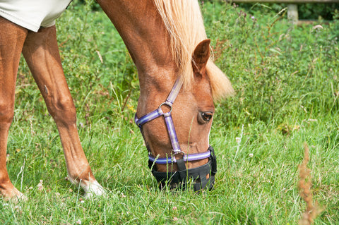 What to feed an overweight horse   Haygain UK