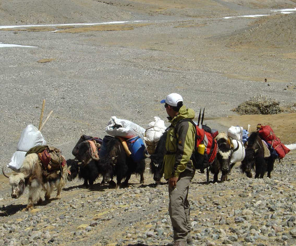 Image of Yaks