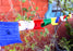 Tibetan Buddhist Windhorse Prayer Flags - nepacrafts
