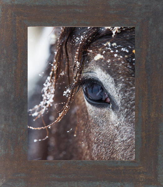 Horse Eye SSW99 - Summer Snow Art
