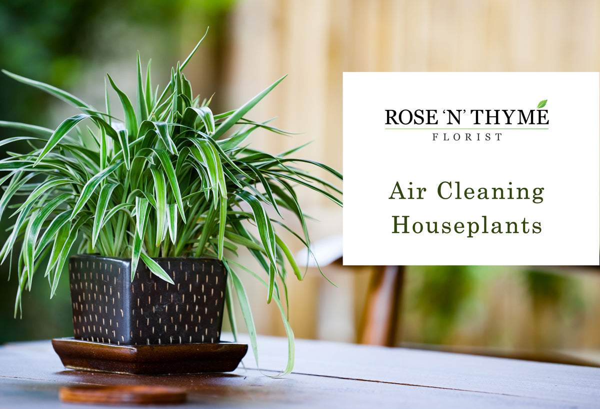 Air Cleaning Houseplants That Can Improve Your Health
