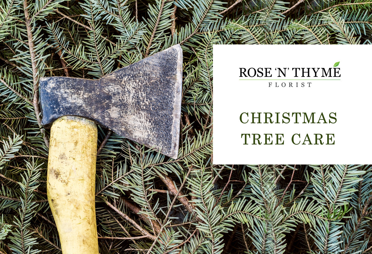 Caring for your Christmas tress