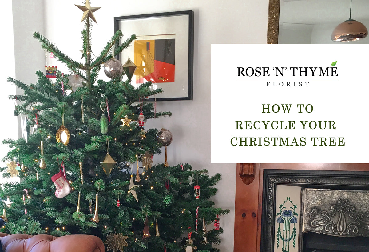 How to Recycle Your Christmas Tree in the Glasgow Area