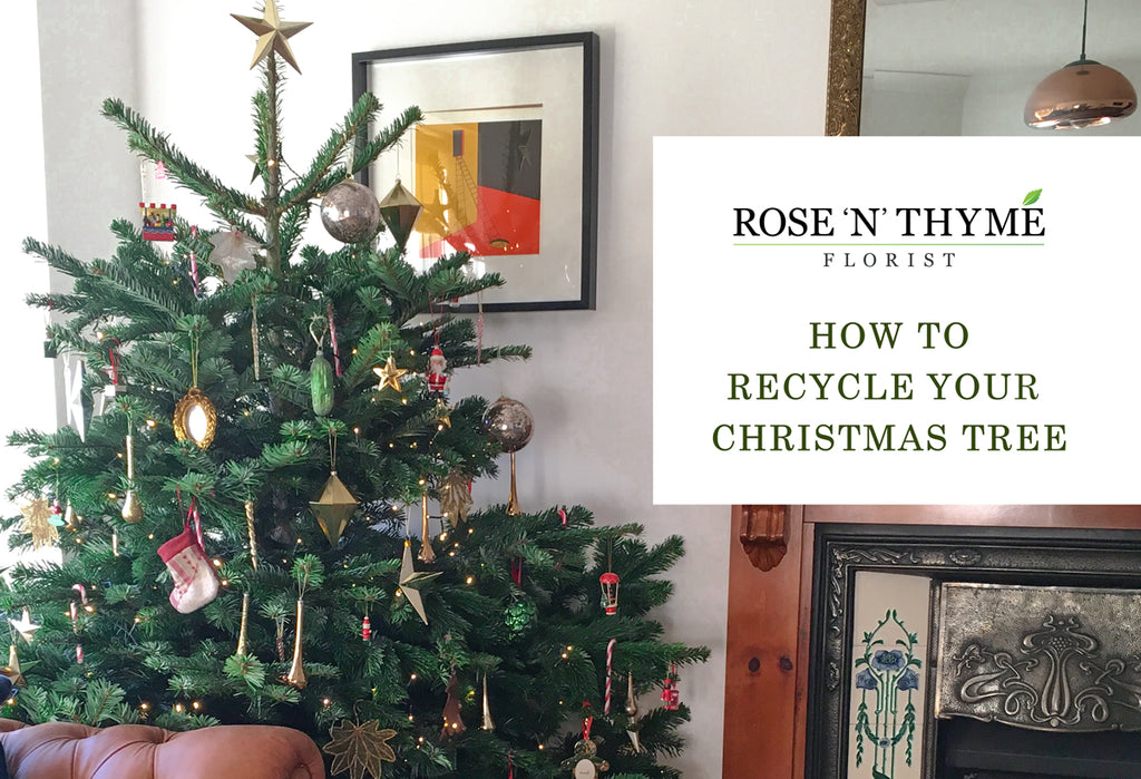 "decorated Christmas tree and blog title ""How to Recycle Your Christmas Tree"""