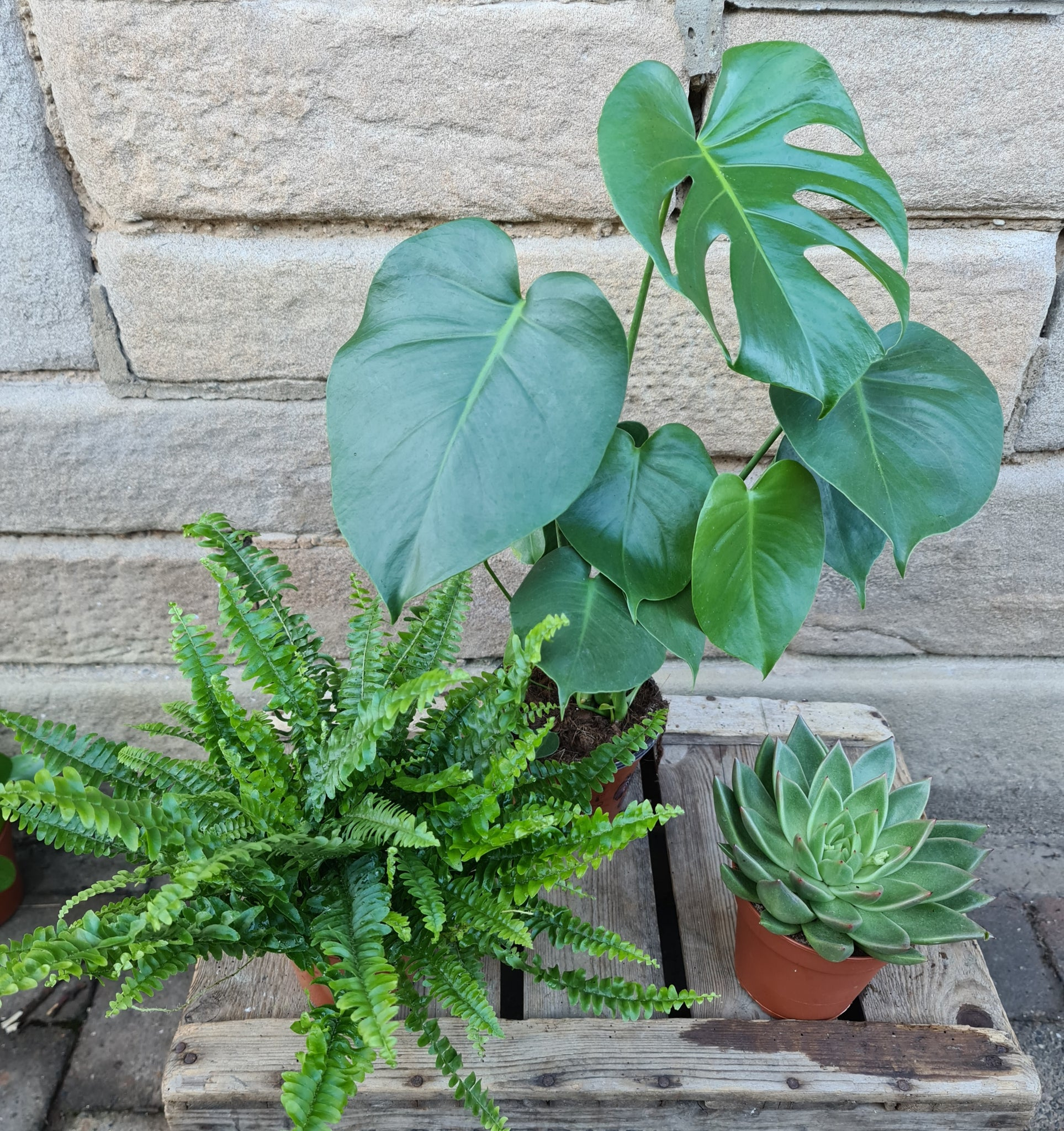 3 Indoor Plant Bundle