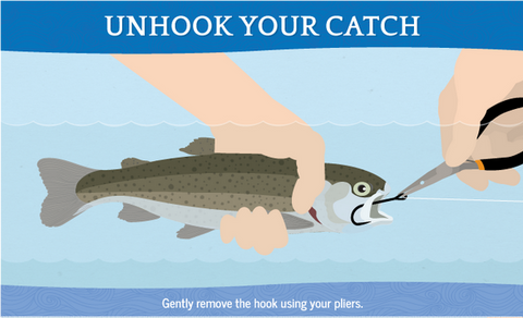 How to handle fish