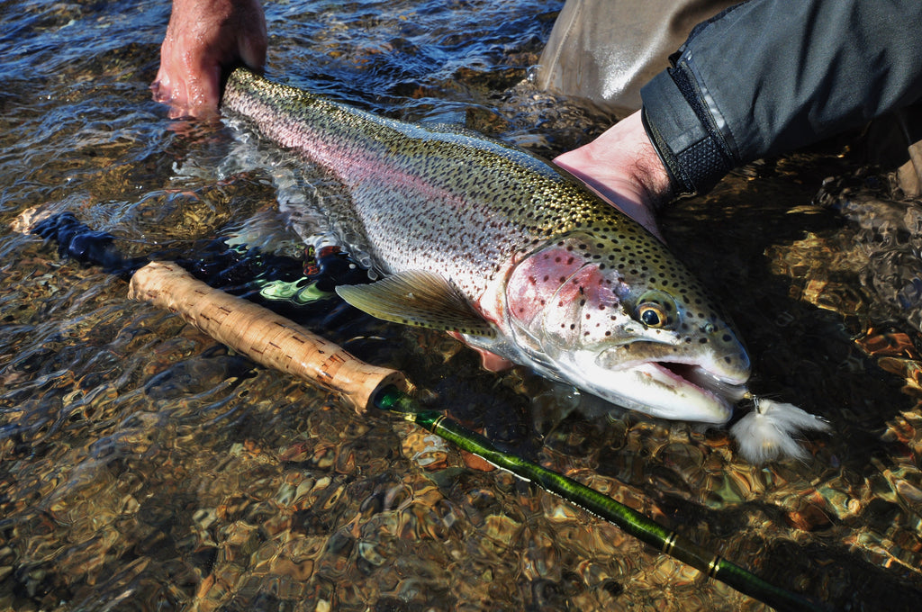 Alagnak River Fishing Forecast - Alaska Trophy Adventures a Bristol Bay Fishing Lodge expects a Fantastic 2017 Season - Alaska's Best Fishing Trip
