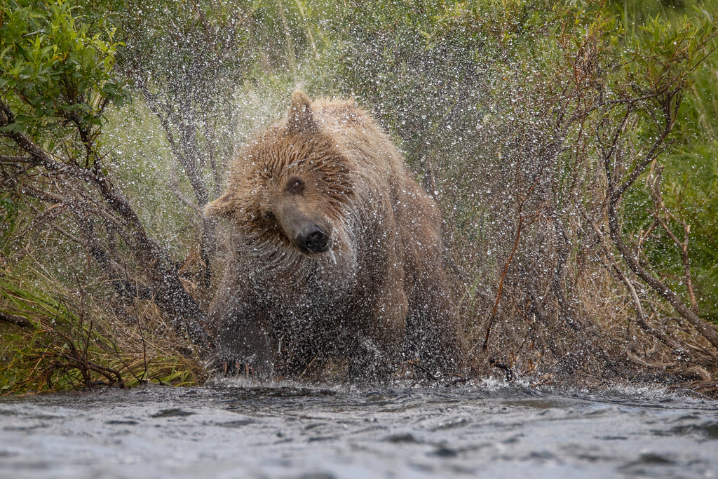 Best Brown Bear Viewing Photography Lodge In Alaska