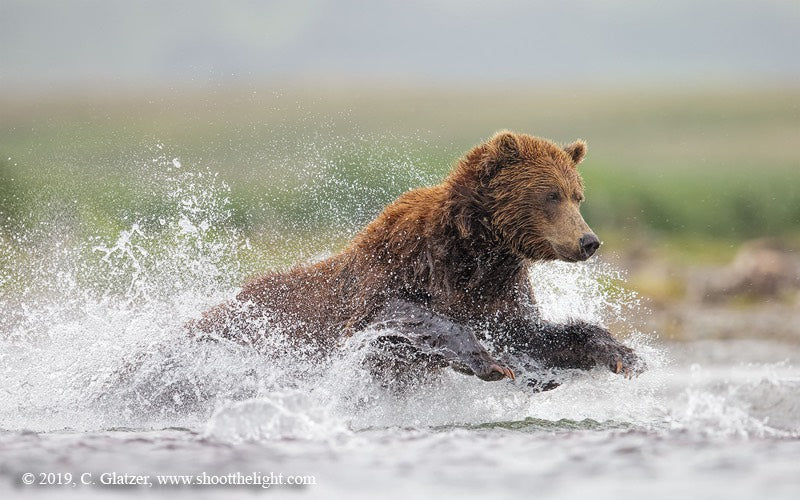 Charles Glatzer to hold 2020 Alaskan bear and salmon photography workshops at ATA Lodge