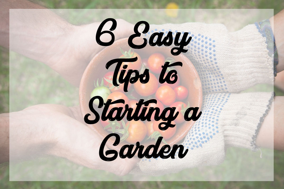 6 Easy Tips to Start a Garden
