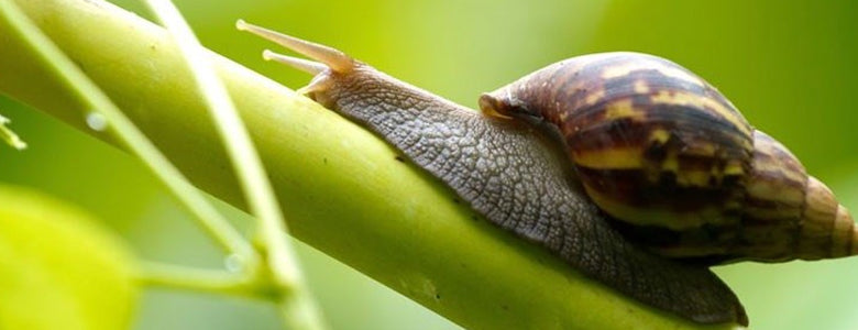 5 Pesky Garden Pests and How to get Rid of Them Naturally