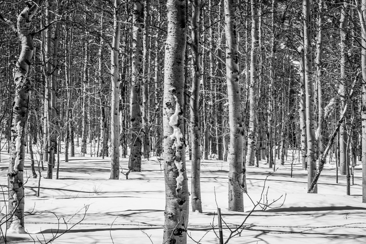 Black and White Nature Forest Wall Art