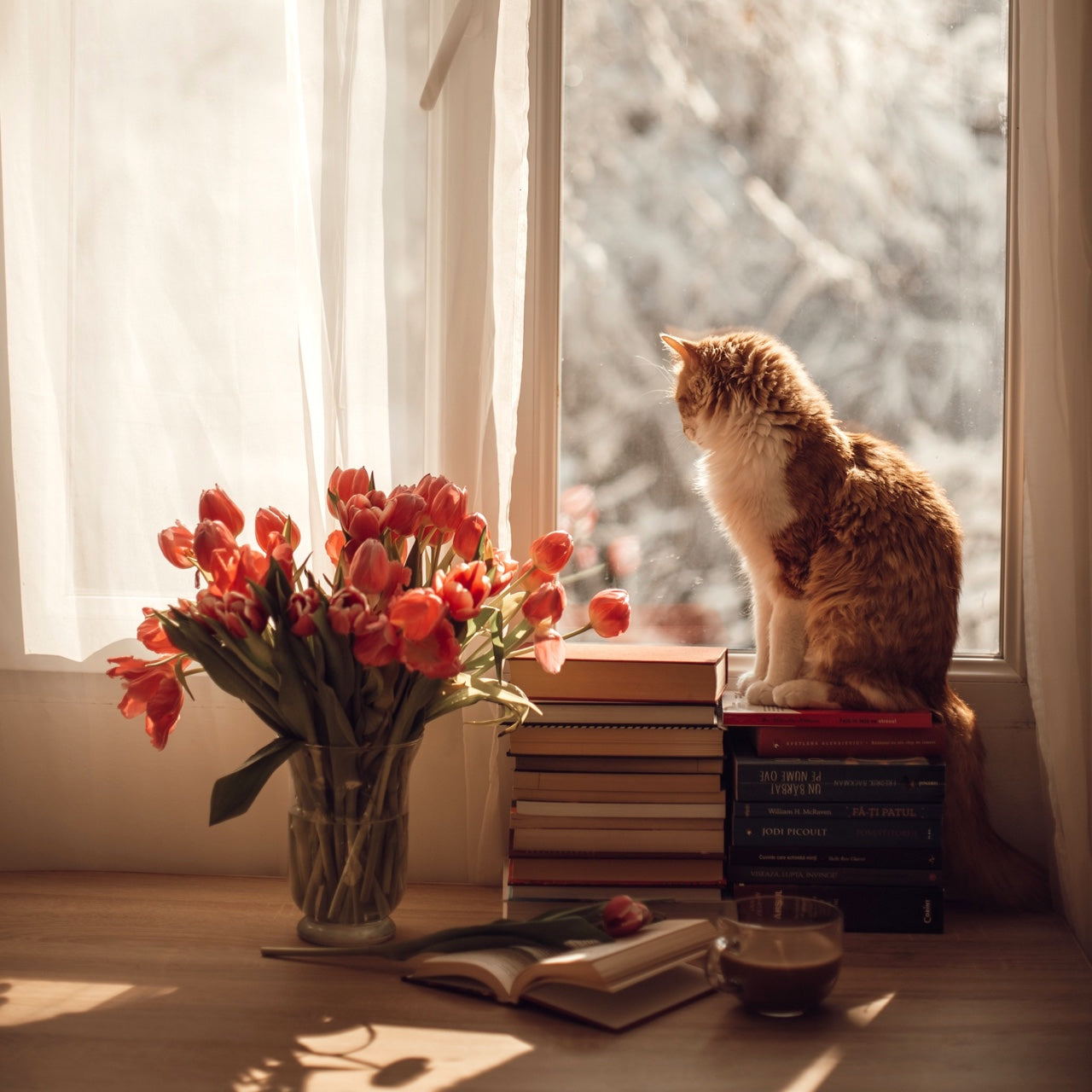 Cat in window with summer flowers